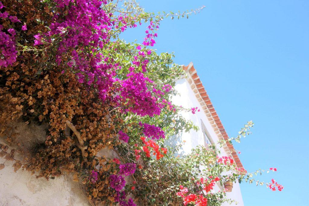 ポルトガルの花